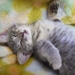 (夏・冬)猫のクーラーの適温は何度?意外と分からない設定温度