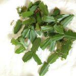 取り除いたシャコバサボテンの芽