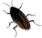 ゴキブリ 駆除と卵の対策!小さいほど早めに退治