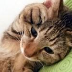 猫の元気・食欲がない!病気の有無を調べました