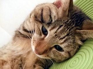 元気がない猫