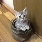 猫の暑さ対策とグッズ情報!エアコンある・なしで節電生活!