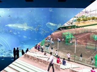 美ら海と球場