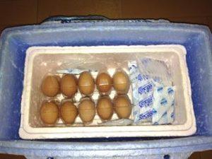 発泡スチロールと卵