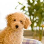 犬の留守番は危険!夏は熱中症の、あの対策が欠かせない!