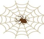 室内のクモを退治する方法と厳選お役立ち3アイテム!【最短と長期コース】