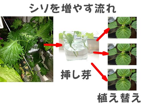 siso-fuyasu-nagare