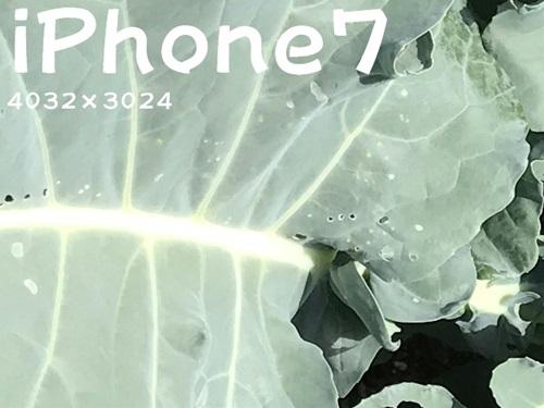 iphone7-kyabetu