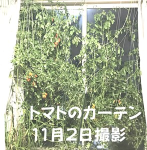 tomato-katen