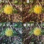ホワイトバランスの色味の違いをアクションカメラLEVINで撮影した比較画像