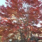 柳生博さんの八ヶ岳倶楽部でお茶して紅葉を楽しみました。