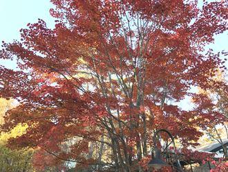 八ヶ岳倶楽部の紅葉