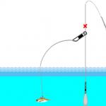 アジの泳がせ釣りの仕掛けなら、初心者も大物が釣れる!
