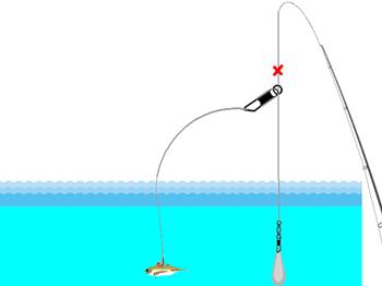 アジの泳がせ釣り