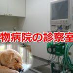 ペットのための良い動物病院の選び方。追記『愛犬との別れの日は突然やってきた・・・』