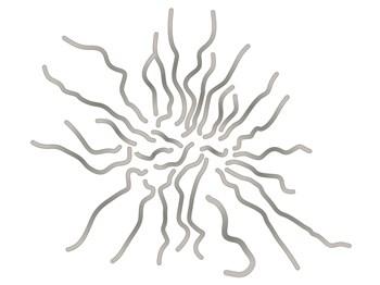 水虫はカビの菌