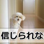 「犬は三日飼えば三年恩を忘れぬ」でも、恩を感じない例外もある!