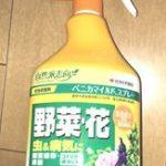 パンジーやビオラの栽培で困った病気と虫の対策まとめ