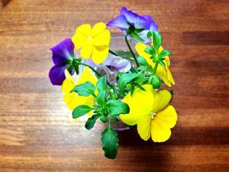 ビオラを花瓶に挿した
