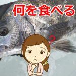 【初心者編】チヌが釣れる!使うエサはこれ!
