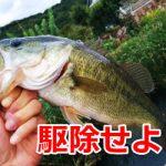 ブラックバスの駆除は賛成だけどその後の魚の処理が問題!