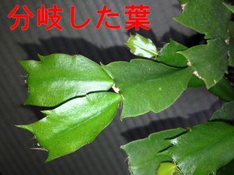 分岐した葉