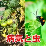 【家庭菜園】農薬が効かない!耐性菌の発生を抑え病気を治すポイント