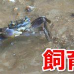 釣りエサのカニが余ったときの飼育・保存方法はこれ!