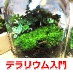 はじめての苔の育て方|室内で栽培するための用品や方法まとめ!