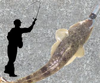マゴチ釣り