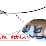 サゴシ釣りでワイヤーを使うと釣れなくなる?ウソ、ホント!