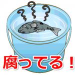 魚を釣ったらバケツに入れちゃダメ?鮮度どころか食中毒に!