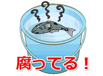 バケツで魚が腐ってる