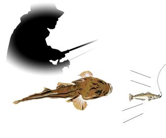 マゴチを泳がせ釣り