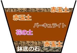 シャコバサボテンの植え替えの用土