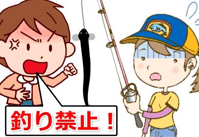 ウナギは釣り禁止