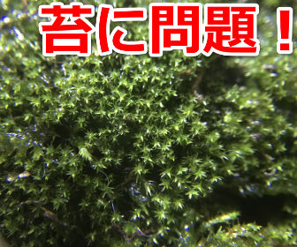 苔栽培の問題