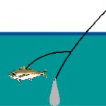 それ危険!泳がせ釣りの注意点を知らないと後悔するよ!
