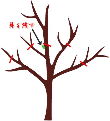 樹形を小さく維持する