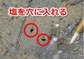 マテ貝の穴に塩