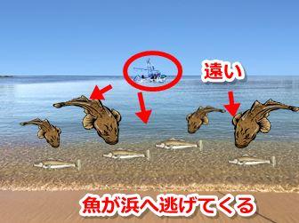 魚が浅場へ逃げてくる