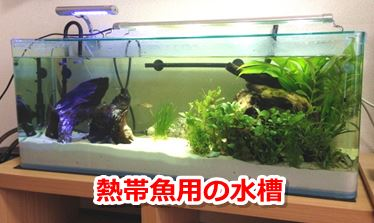 熱帯魚用の水槽