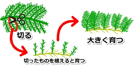 苔が増えるイメージ