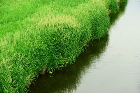 流れの弱い川