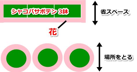 長方形の樹形